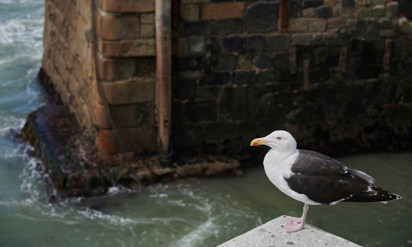 Seagull on a harbour wall